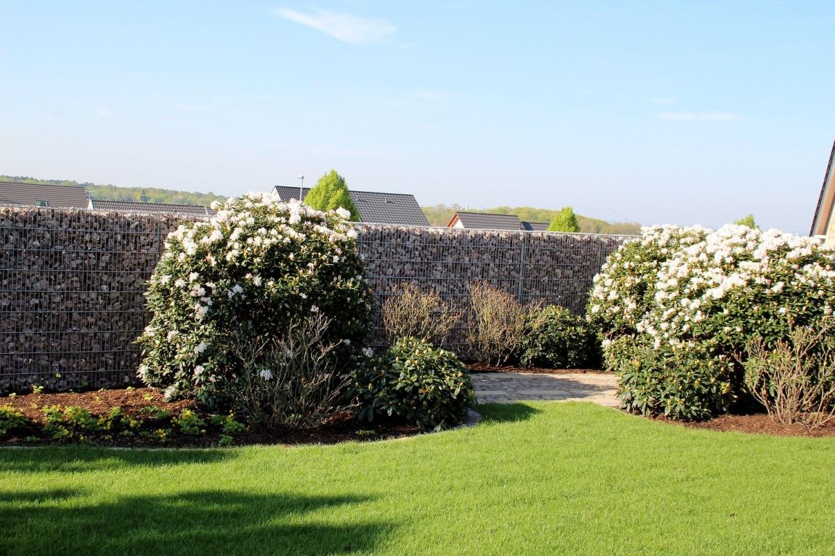 pflanzen und vegetation pankraz galabau garten landschaftsbau. Black Bedroom Furniture Sets. Home Design Ideas
