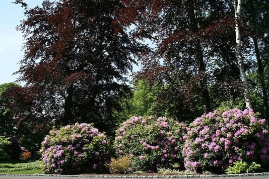 galabau-pflanzen-vegetation-4