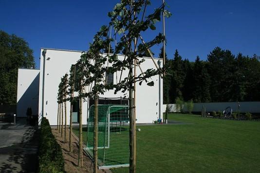 galabau-pflanzen-vegetation-6