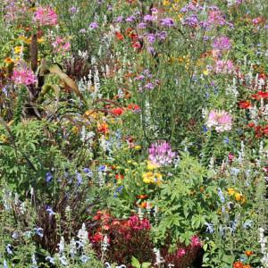 Pflanzen und Vegetation